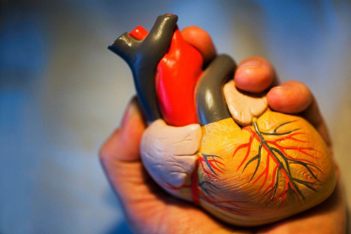 Hỗ trợ điều trị bệnh về tim mạch